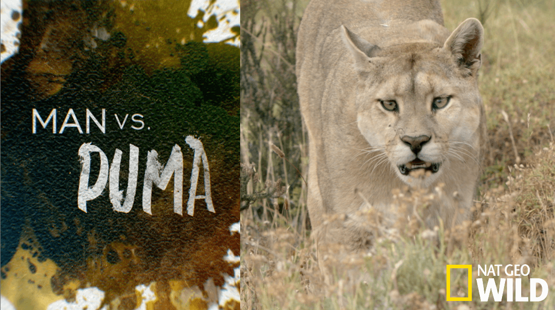Man vs. Puma
